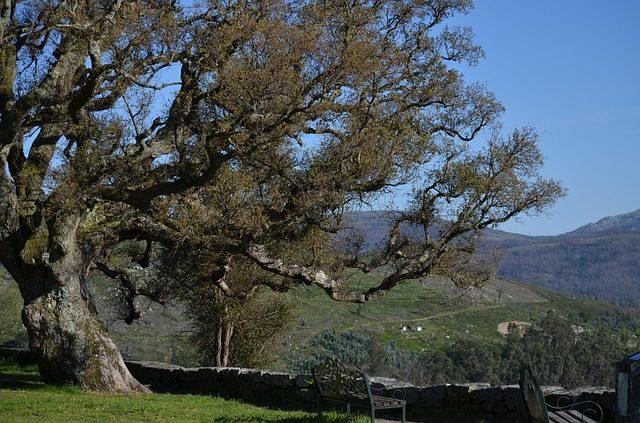 cork-oak-3409363_640.jpg